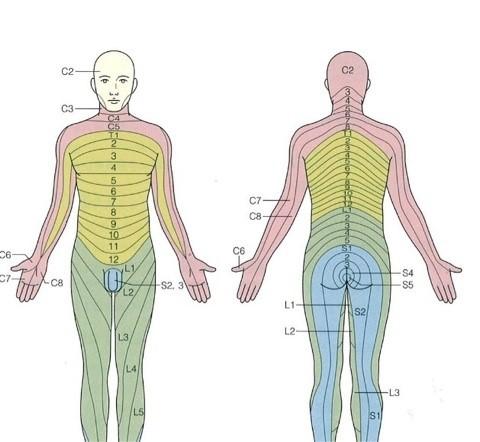 左 半身 しびれ 自律 神経 自律神経失調症の症状:手足のしびれとは? 浦和整体院